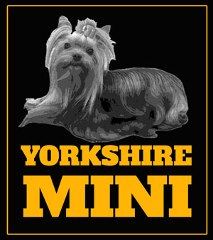 Yorkshire Mini – Autenticos Yorkies Miniatura
