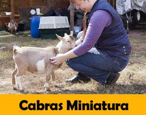 cabras-miniatura